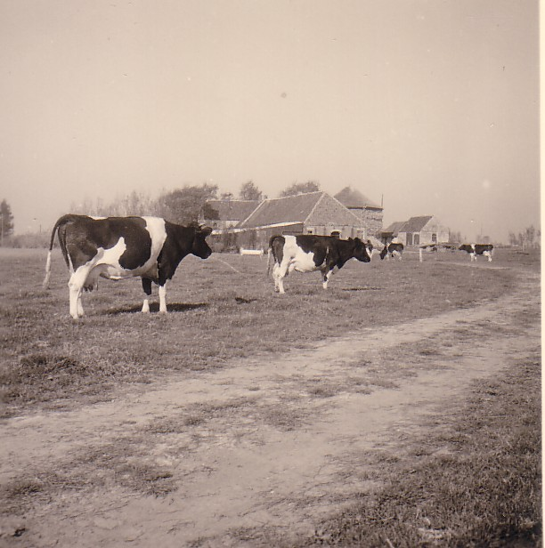 Boerderij Burgerdijkseweg - De Lier